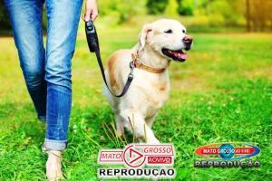 AGORA É LEI | Governo de MT sanciona lei que proíbe circular com cães sem coleira em locais públicos 78
