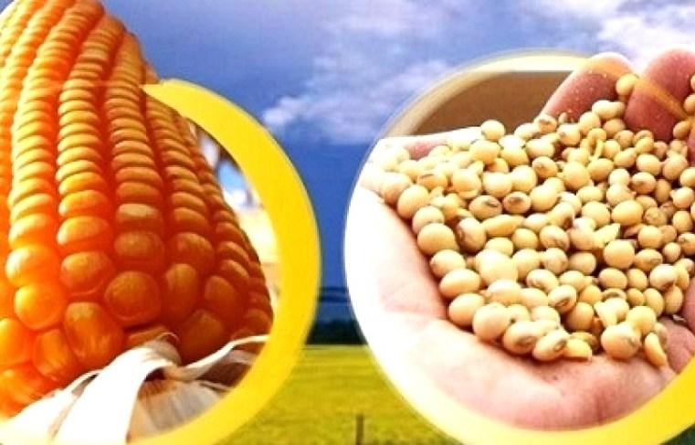 Preços da soja e milho tem base para seguirem altos?