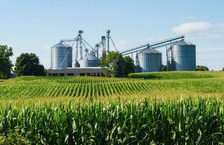 Soja tem aumento no custo de produção, mas grão valoriza com alta do dólar