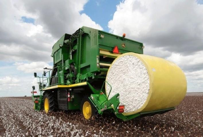 Preço do algodão recua e ritmo da colheita está mais lento em Mato Grosso