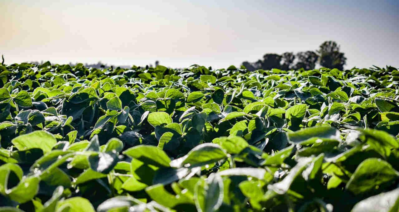 Às vésperas do início do plantio, previsões indicam boa safra de soja para MT