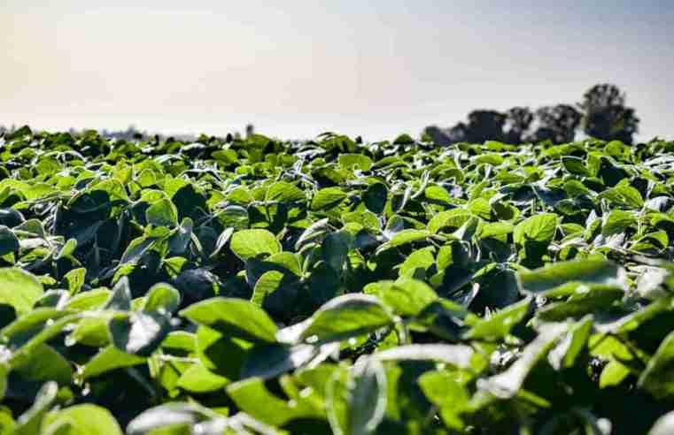 Área plantada de soja em Mato Grosso deve alcançar 10,84 milhões de hectares
