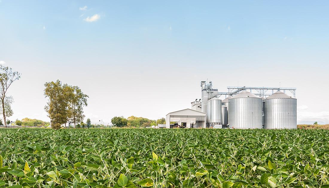 Armazenagem de soja é principal problema de produtores em nova safra; Aprosoja aponta solução