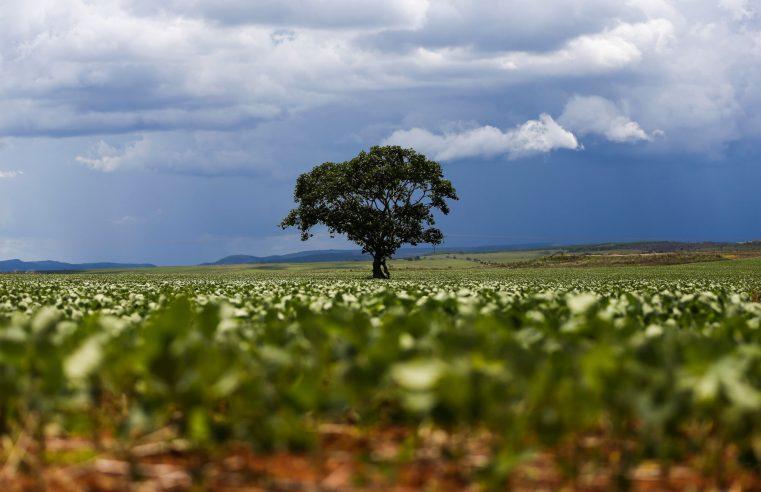 Clima: Produtores de MT focam atenções nas previsões para nova safra