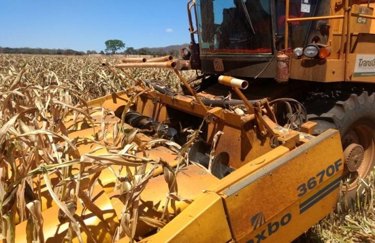 Colheita de milho é concluída em Mato Grosso