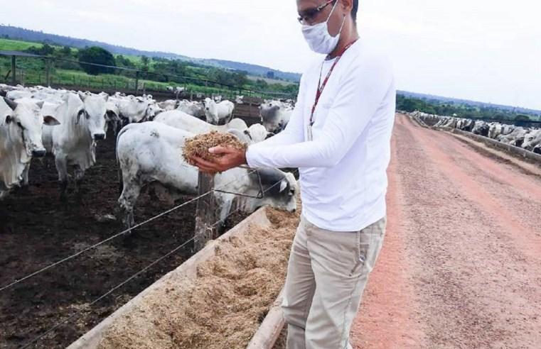 Incertezas sobre caso de 'Vaca louca' pressionam mercado da arroba