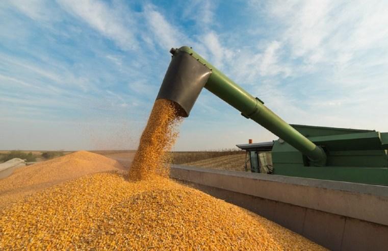 Perdas na produtividade reduzem estimativas de receita do milho mato-grossense