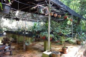 parc plantes