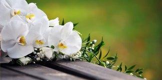 significato-fiori-matrimonio
