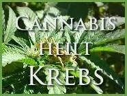 marihuana-cannabis-heilt-krebs