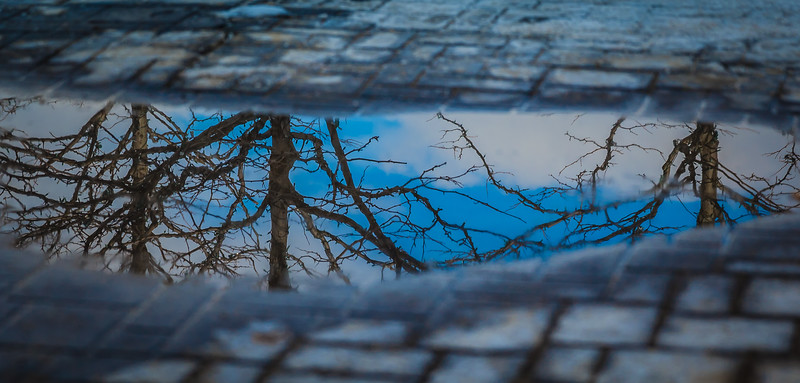 Tree Puddle Reflections
