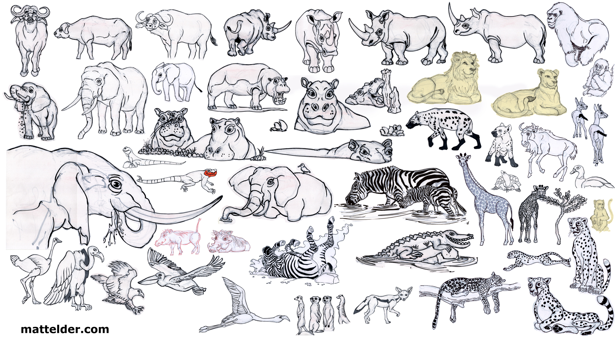 Easy Animal Drawings Images About Cartoon On