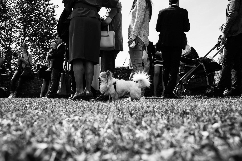 Matrimonio-Belluno-Matteo-21-maggio-2016-matteo-crema-fotografo-00070
