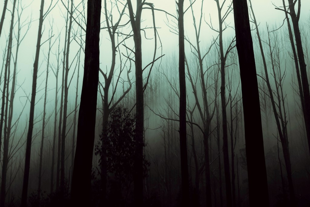 ThursdayAesthetic Atmosphere photo showing trees and mist