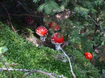 Mushroom gifts under the tree