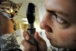 Tierarzthelfer/in werden: Ausbildungsfakten