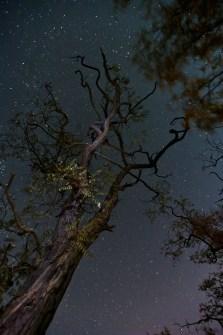 harz-astrofotografie