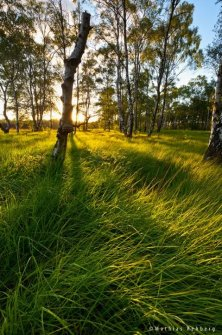 himmelmoor-quickborn-birkenwald