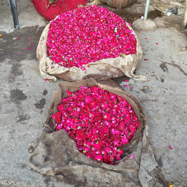 rose heads for sale jaipur maud interiors