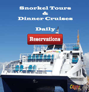South Side Dinner Cruise Calypso Best Prices