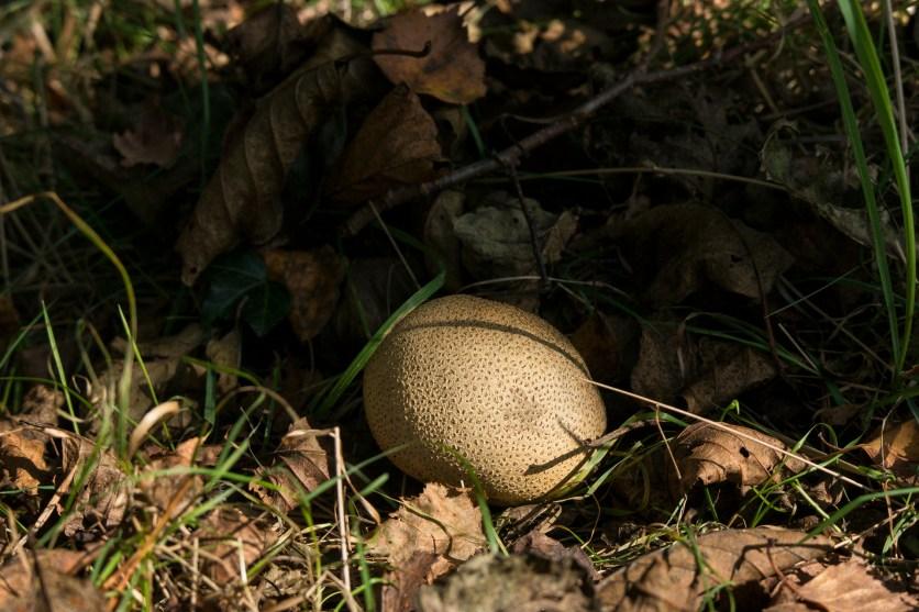 common earth ball