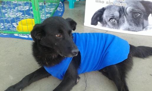 Protectora de animales invita atransmitir una tenencia responsable de animales