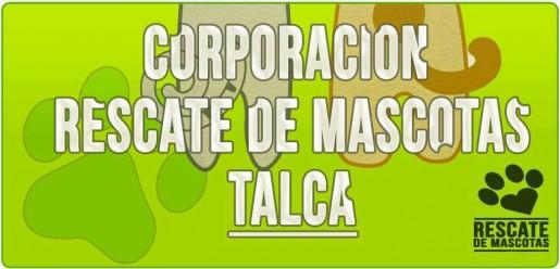 Corporación Rescate de Mascotas Talca: creando conciencia de la adopción y tenencia responsable