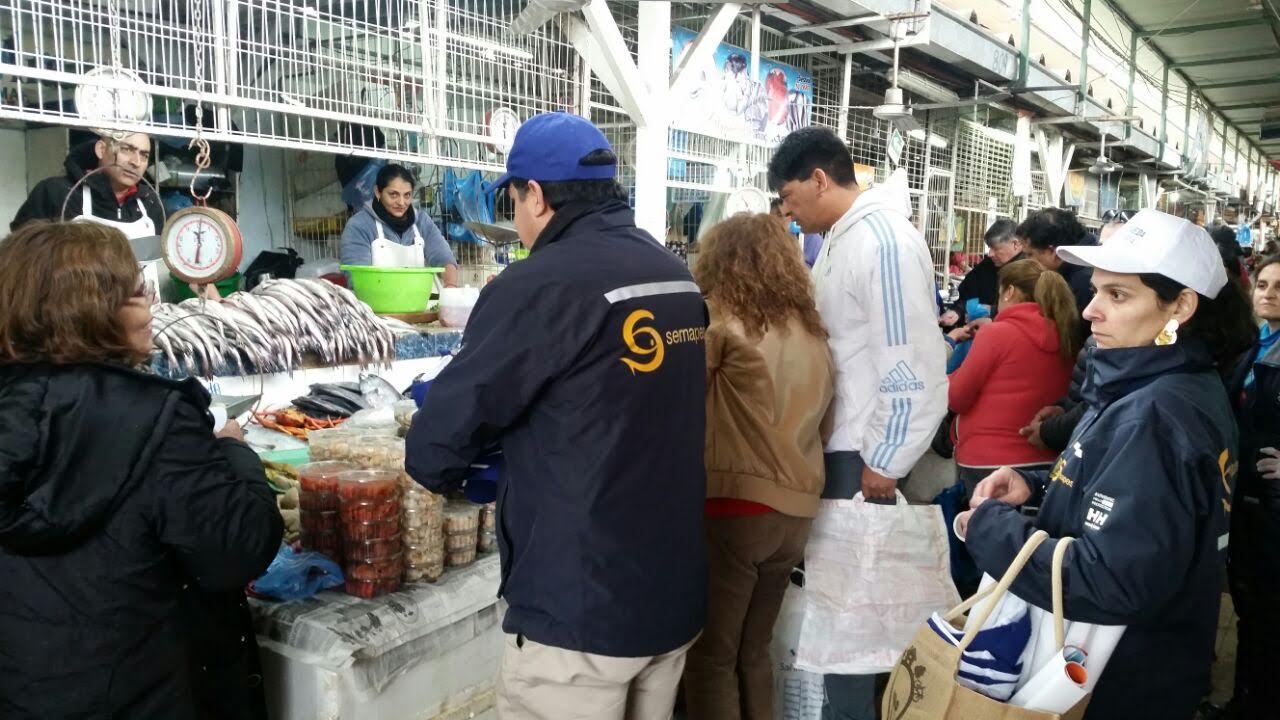 Sernapesca reitera llamado a respetar la veda de la merluza durante septiembre