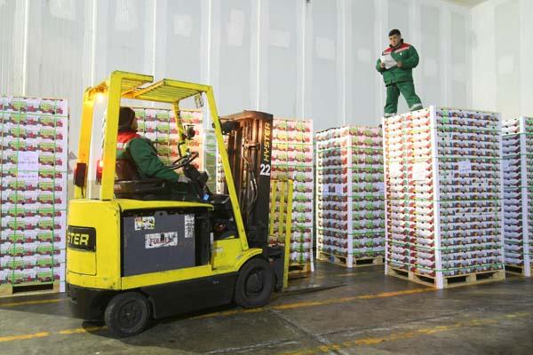 Lluvias navideñas impactan de forma moderada al sector de la fruta de exportación