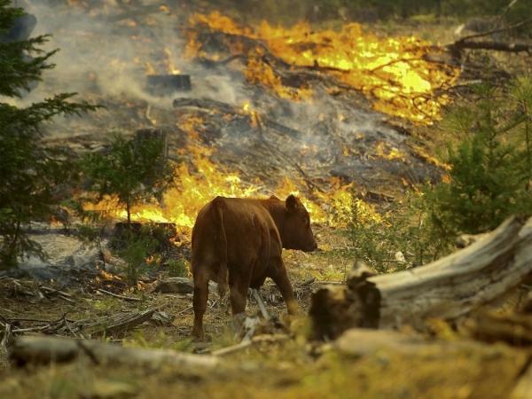 Federación del Rodeo Chileno compromete ayuda para animales afectados por incendios