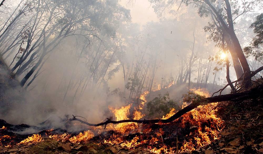 Universidad de Talca crea Beca Incendios Forestales en apoyo a estudiantes afectados por la tragedia