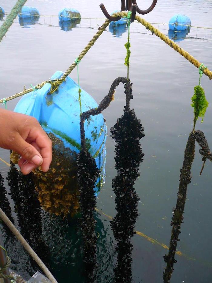Organizaciones de pescadores pueden optar a fondos de apoyo para impulsar acuicultura de pequeña escala en región del Maule