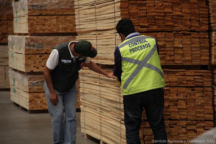 4,5% creció la producción de maderas y embalajes de madera de exportación en el Maule