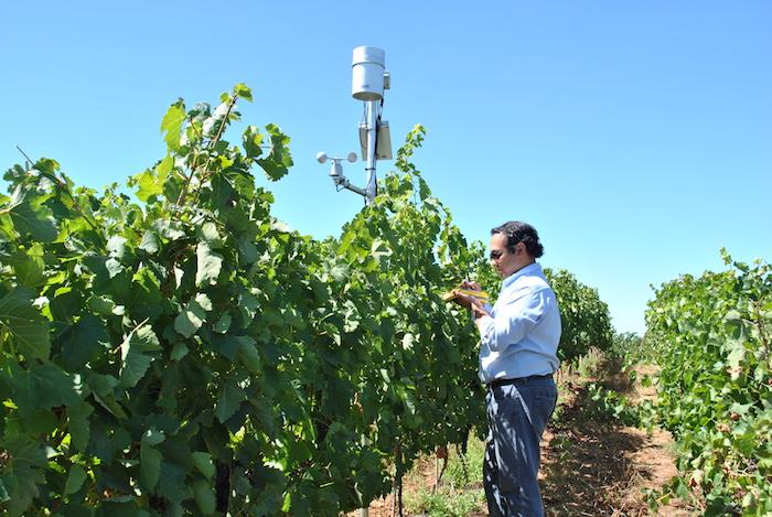 Investigadores logran mejorar calidad de fruta con un ahorro de agua