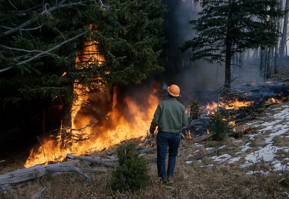 Incendios forestales y cambio climático inciden en la propagación de plagas forestales
