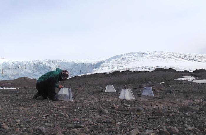 Investigación sobre plantas antárticas favorecerá recuperación de especies dañadas por cambio climático