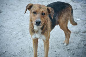 stray_dog_bahamas