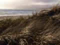 dune_grass_by_the_ocean