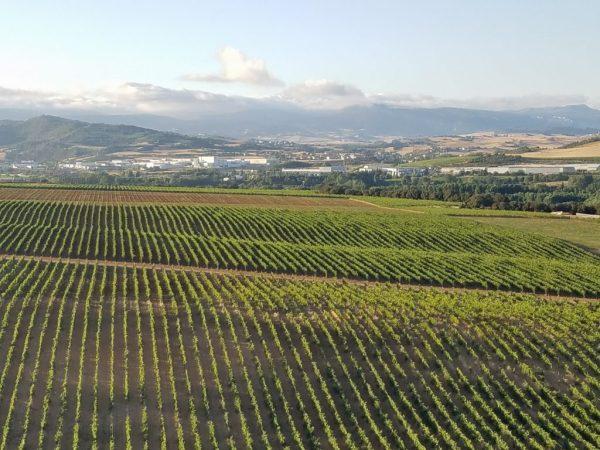 Arinzano vineyards