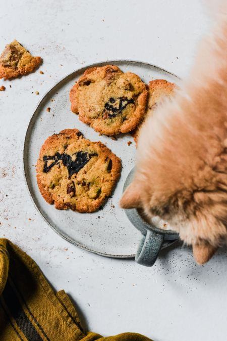 Pause cookies et chat