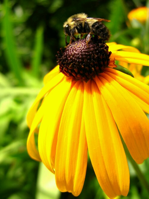 wpid-Fluffly_Bee.jpg
