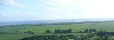 Fields of sugarcane crops