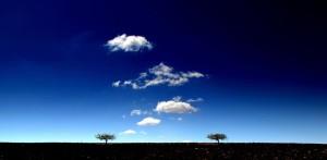 cielo_alberi