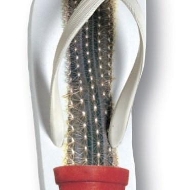 mauro Cactus