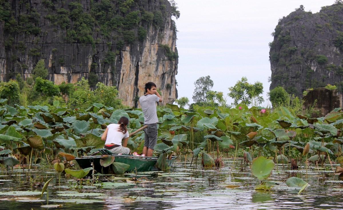 Locals collecting lotus in Tam Coc