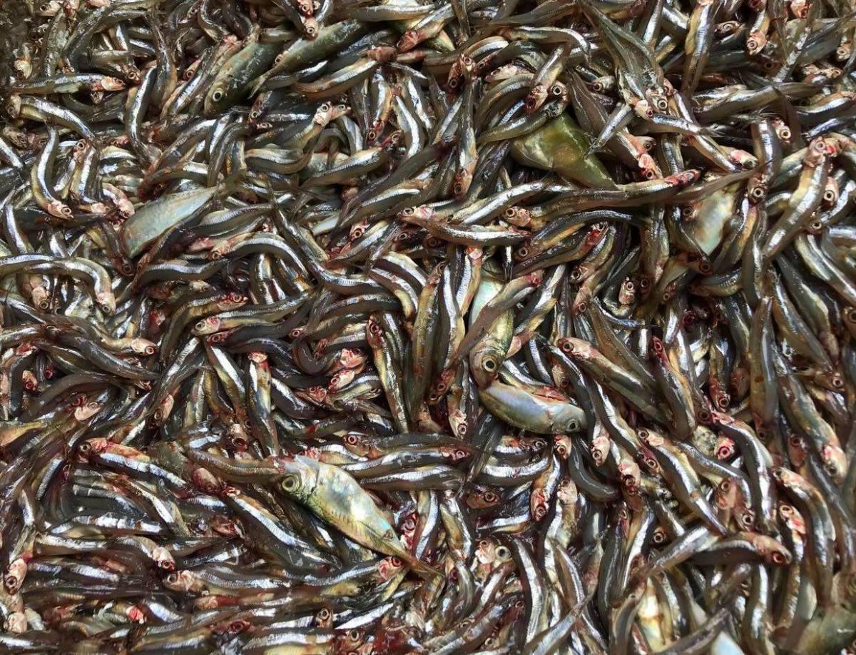 Fish market in Cairo