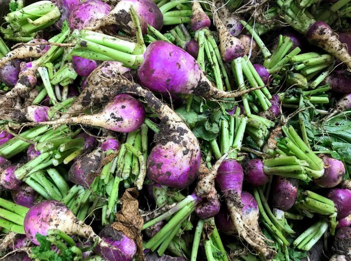 Winter vegetables in Cairo