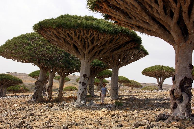 Diksam plateau in Socotra