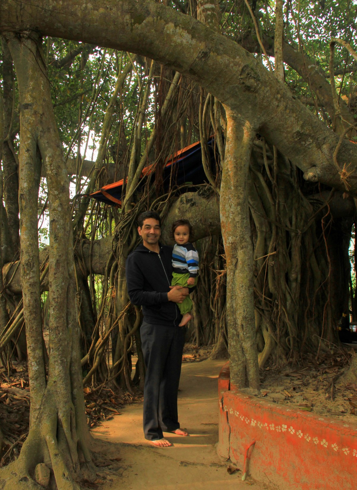 The thousand year old banyan tree of Amadpur