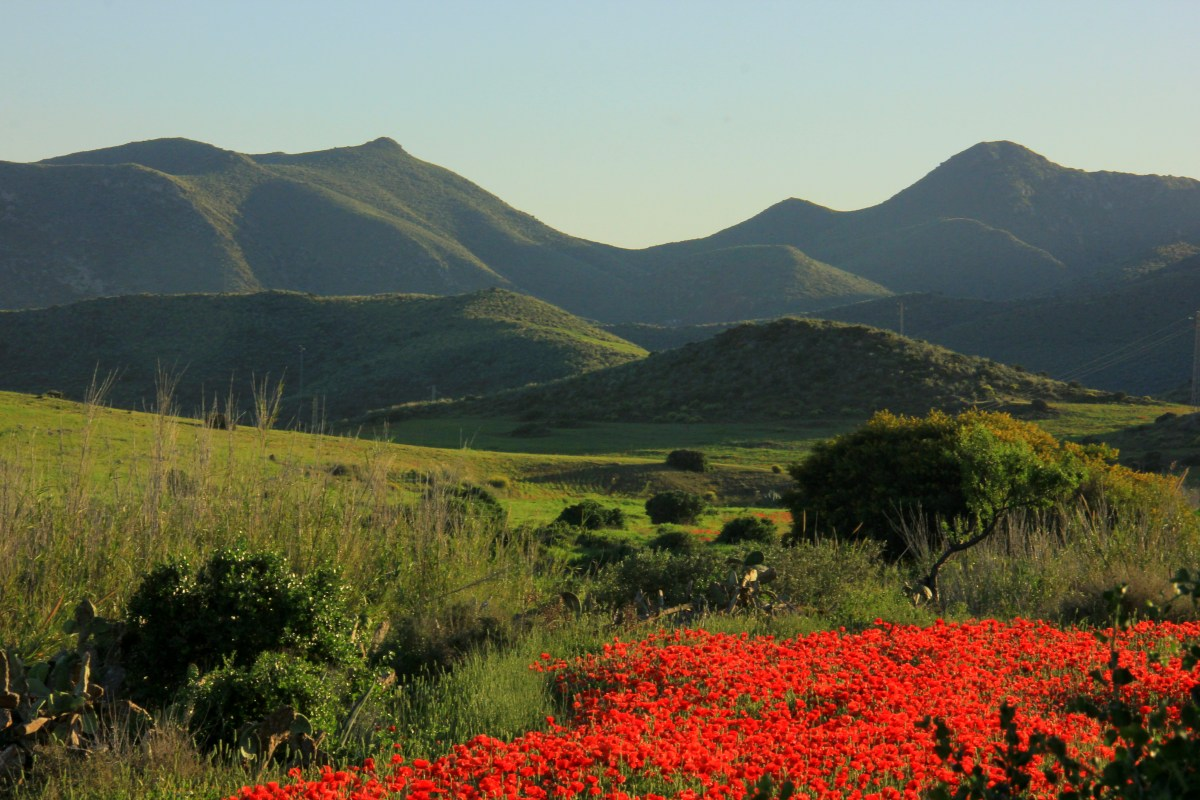 wildflowers blooming at cabo de gata national park